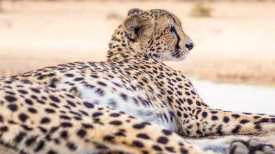 Permalink to:DeLuxe 5-Tage Fotosafari Afrika