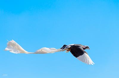 PilArt Photography Referenzbild Vogel mit Plastiktüte Umweltverschmutzung